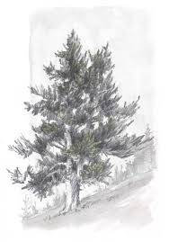 learn how to draw trees in this simple step by step demonstration