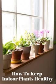 indoor window box ideas indoor window boxes indoor and window