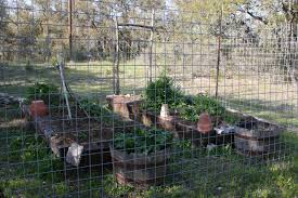 a texas hill country garden late march photographs of the