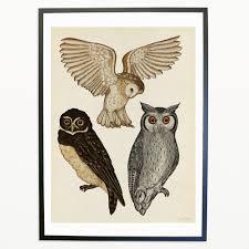 owls print u2013 katie scott