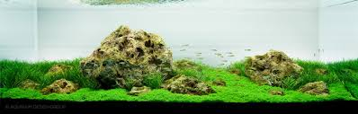 Aquarium Aquascapes Getting Started With Aquascaping U2022 Aquascaping Love