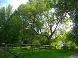Best Trees For Backyard by Best Tree For Backyard Images Home Design
