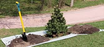 tree planting omaha tree services arborist and tree removal