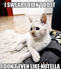 Silly Cat Memes - lol cats 50 awesomely funny cat photos to crack you up