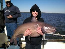 santee cooper fishing guides pro guide and pro angler capt darryl smith sc fishing big catfish