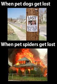 Funny Spider Meme - a when pet dogs get lost funny spiders get lost dump a day