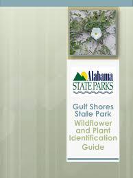 plants native to alabama gulf shores state park wildflower and plant identification guide