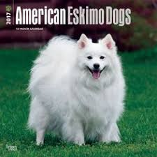 pictures of a american eskimo dog paintings of american eskimo dogs american eskimo dog mailbox