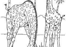 realistic animal coloring pages animal coloring pages just colorings