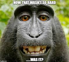Baboon Meme - pleasant baboon imgflip