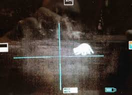 Cheap Coon Hunting Lights Raccoon Hunting 22 Cal Vs 25 Cal With Thermal Rifle Scope Pest