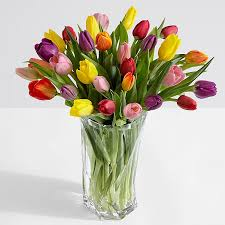 Images Of Tulip Flowers - tulips send tulip bouquets from 34 99 proflowers