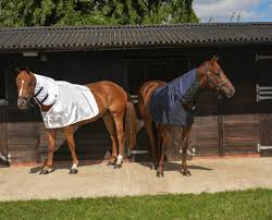 Outdoor Rugs For Horses Bossy S Bibs Maneguards Prevention Cure For Mane Loss