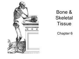 7 1 the skeletal system 7 2 bone tissue tissues organs of the