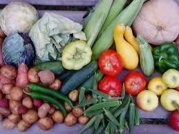 10 tips on vegetable gardening for beginners family focus blog