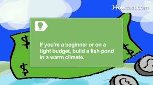 how to build a backyard fish farm image with awesome backyard fish
