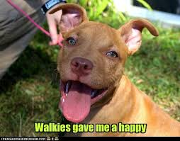 Pitbull Puppy Meme - i has a hotdog pitbull funny dog pictures dog memes puppy