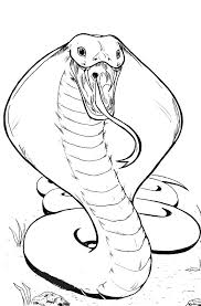 drawn cobra snake hissing pencil color drawn cobra snake