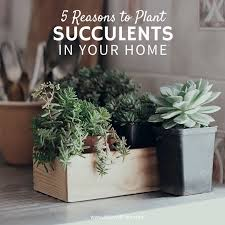 amazon succulents 186 best succulent diy images on pinterest succulent plants