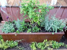 5 must have herbs for your cocktail garden diy