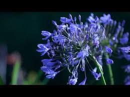 imagenes flores relajantes flores relajantes d youtube