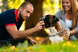feeding a boxer dog 13 things potential boxer owners need to know simply for dogs