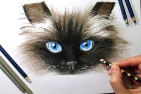 drawing cat u0027s face in colored pencil timelapse youtube
