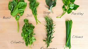 herb chart substituting dried herbs for fresh conversion chart cooking to