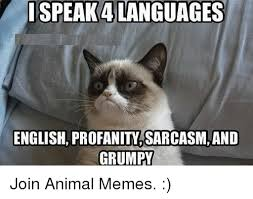 Sarcastic Cat Meme - i speak 4languages english profanity sarcasm and grumpy join