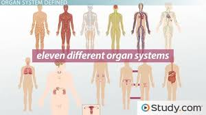Anatomy And Physiology Definitions What Is An Organ System Definition U0026 Pictures Video U0026 Lesson