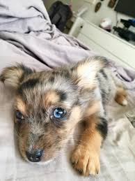 Puppy Eyes Meme - put me like my new puppy s eyes are mesmerizing
