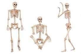 posable skeleton size posable skeleton mugwomp