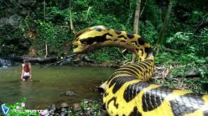 vidio film ular anaconda videobuster de zeigt piranhaconda anaconda und piranha deutscher