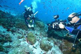 essay on marine life a memorable trip essay essay on marine life