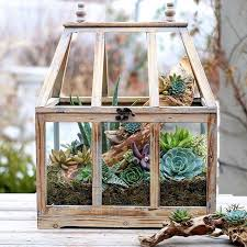 best 25 indoor succulent garden ideas on pinterest indoor