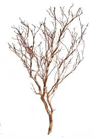 manzanita trees gold metallic manzanita branches 18 24 in blooms and branches