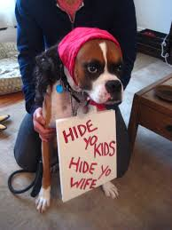 Halloween Costumes Boxer Dogs Halloween Costume Dog Antioine Dogsonperez Solomon