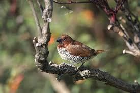 Nc Backyard Birds Where To Find Tropical Birds In The U S Audubon