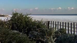 christmas trees help replenish bradley beach dunes video njtv news