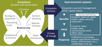 3 protecting conserving and enhancing natural capital u2014 european