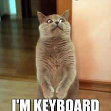 Keyboard Cat Meme - hilarious archives page 573 of 974 cat planet cat planet