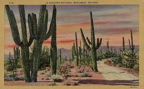 saguaro national park on vintage postcards