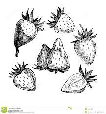 strawberry sketch eurathlon