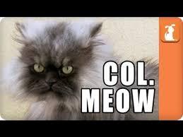 Colonel Meow Memes - colonel meow meme d youtube