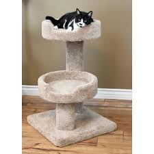 cat trees for extra large cats wayfair