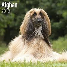 afghan hound collars uk afghan calendar 2018 afghan hound dog calendar