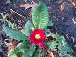 November Flowers November Flowers And Fall Colour That Bloomin U0027 Garden