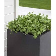 cadix capi lux square planter 60cm on sale fast delivery