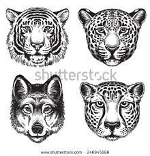 black white vector line drawings stock vector 246945586