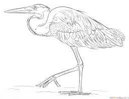 draw blue heron step step drawing tutorials